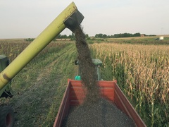 Agriculture Sunflower Harvest Combine loading in a trailer  Stock Footage