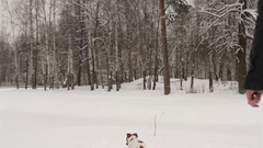 Man Playing With the Dog Jack Russell in a Snowy Forest Stock Footage