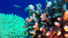 Underwater Colorful Tropical Reef and Coral Crab Stock Footage