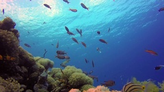 Beautiful Underwater Colorful Corals and Fishes Stock Footage