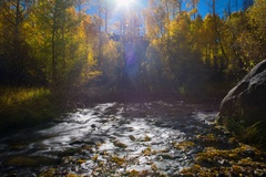 6K Timelapse of Fall Foliage by River at Daytime in Eastern Sierra Stock Footage