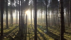Mystical forest: sun rays shining through trees Stock Footage