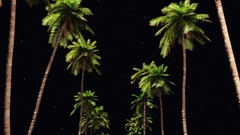 Driving through palm trees night Stock Footage