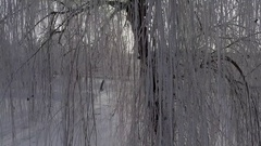 Panorama tree branches in the snow, the sun is shining into the camera Stock Footage
