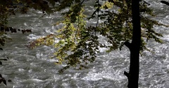 Autumn Leaves Fall Into a Scenic Muddy Mountain River Stock Footage