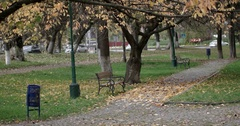 Bench in an Autumn City Park With Driving Vehicles at Background, Sunny Day Stock Footage