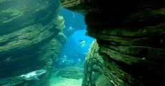 Magellanic Penguins Swimming Through A Crevice - Spheniscus Magellanicus Stock Footage