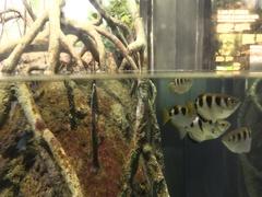 Aquarium fish in the tank Stock Footage