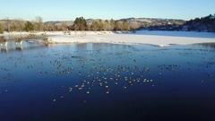 Aerial Overhead of Flock of Ducks Geese Waterfowl City Lake Winter Stock Footage