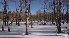 Gliding Aerial Shot Going Through Hardwood Forest in Winter Blanket Snow Stock Footage