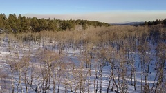 Aerial of Aspen Hardwood Forest in Winter Above the Canopy Stock Footage