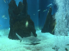 Sharks swimming with other fish in the tank Stock Footage