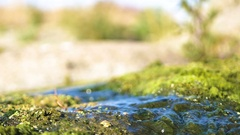 Closeup of little country stream with algae low angle Stock Footage