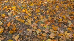 Slow motion footage of ground covered with beautiful autumn leaves Stock Footage