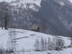 Man leads bridle a horse on a mountain road near the forest covered by snow Stock Footage