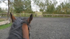 First person view of riding a horse. Point of view of rider walking at stallion Stock Footage