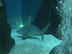 Sharks swimming among the rocks Stock Footage