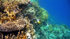 Coral reef (cay) of the Red Sea with a variety of fish. 4K video. Stock Footage