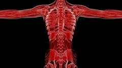 Loop Science Anatomy Tomography Scan Of Human Body Stock Footage
