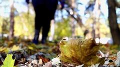Woman`s Feet in Blue Socks Shuffling Leaves. Stock Footage