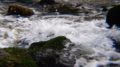The rapid flow of fresh clear water from the spring Stock Footage