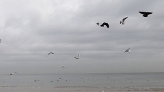A Lot of Flying Seagulls on a Sea Background. Slow Motion. Stock Footage