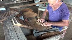 Cuban cigar-maker is rolling cigars. Robaina farm, Vuelta Abajo, Pinar del Rio Stock Footage