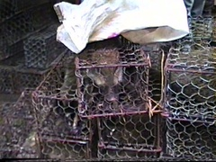 Exotic animals for sale in open meat market in Guangzhou 1990 Arkistovideo