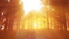 4K Wonderful Epic Evergreen Forest in the Sunset Lightrays 3D Animation Stock Footage
