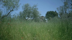 Old Tuscany Villa Behind Grasses and Olive Trees - 29,97FPS NTSC Stock Footage