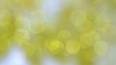 Bokeh of golden shiny glitter particles Stock Footage