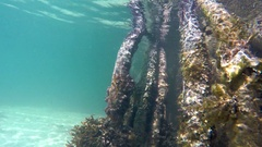 Underwater view of Mangrove roots with algae in a shallow water. Cuba Stock Footage