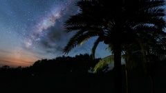 Palms and Milky Way stars at night. Elements of this image furnished by NASA Stock Footage
