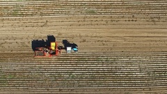 Flight over harvesting potatoes with potato-digger trailer, tractor and people. Stock Footage