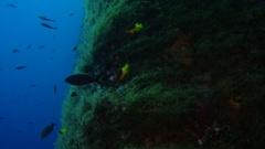 Algae on legs of oil and gas platform rig Stock Footage