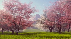 Mount Fuji and flowering cherry trees slow motion 4K Stock Footage