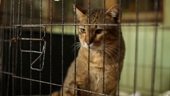 Homeless cat in the cage at Home for animals Foudation in Bangkok,Thailand Stock Footage