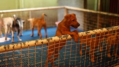 A Homeless dogs in the cage at Home for animals Foudation in Bangkok,Thailand Stock Footage