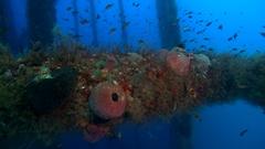 Underwater ecosystem under oil platform  Stock Footage