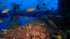 Various fish swim under oil and gas platform rig Stock Footage