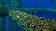 Various sponge on oil rig legs Stock Footage