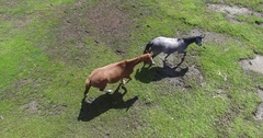 Aerial drone scene of three wild horses running free on a grass Stock Footage