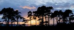 Beautiful sunset silhouette of trees and sea in background and people walking Stock Photos