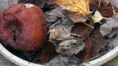 Rotten apple with leaves in a bowl Stock Footage