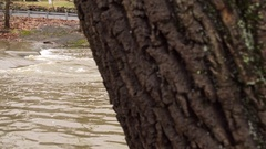 Rushing river water by tree tight shot Stock Footage