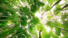 Bamboo forest natural environment  Stock Footage