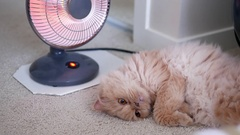 Motion of persian cat lie down and enjoy heat on the floor Stock Footage