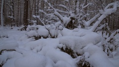 Winter pine forest with snow drifts stock footage video Stock Footage