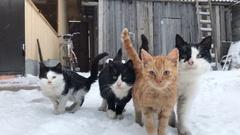 Gang yard cats winter Stock Footage