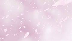 Falling and swirling pink rose petals or cherry tree blossoms. Slow motion. Stock Footage
